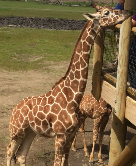 4 Reasons To Visit The Columbus Zoo